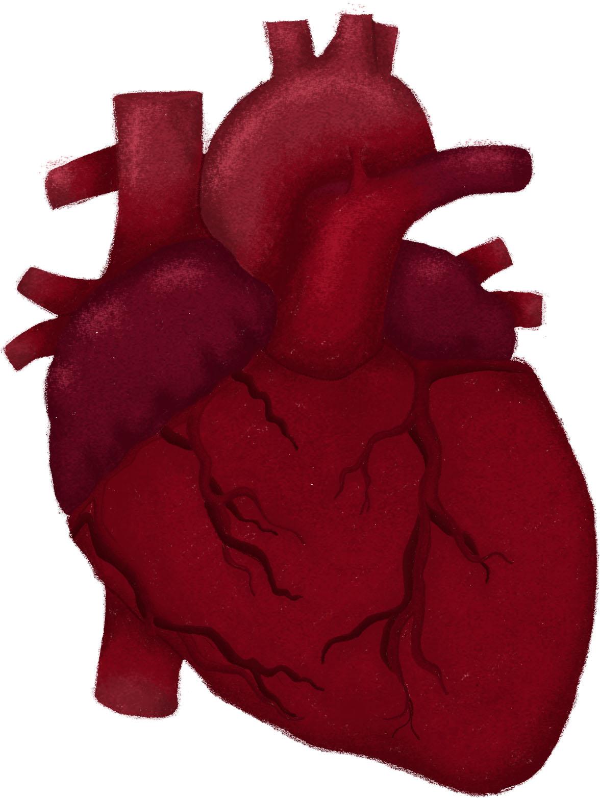 hf_heart
