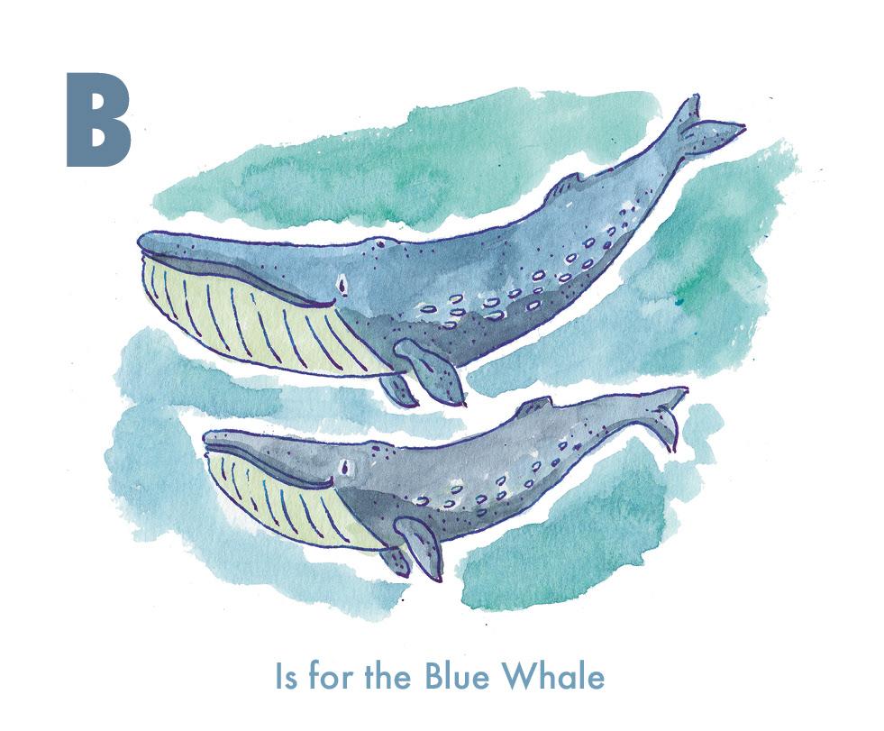 6.animal-alphabets-endangered-animal-series-blue-whale