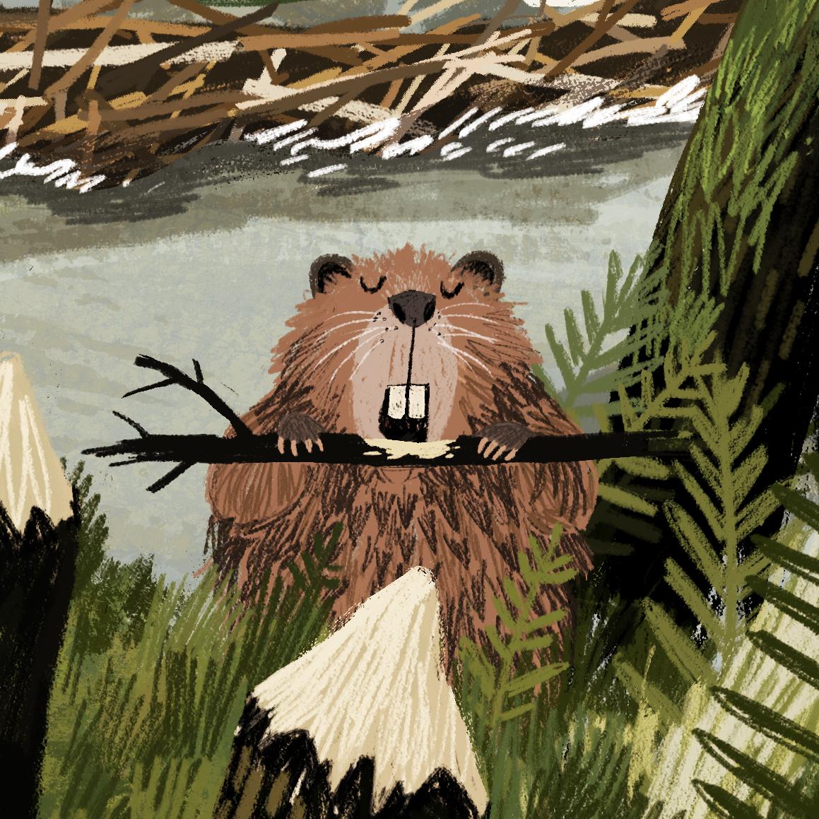 animal-atlas-beaver