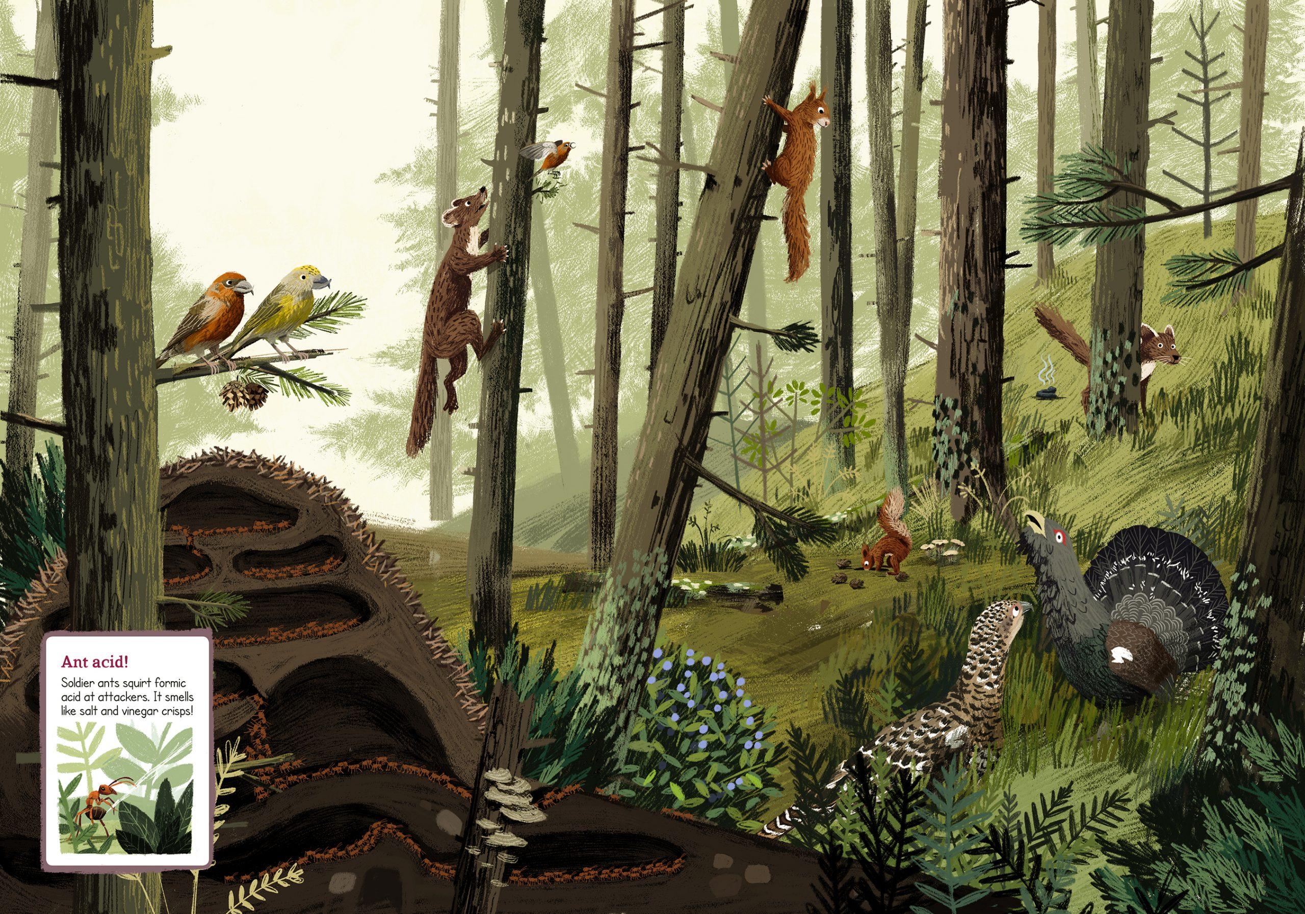animal-atlas-fabforests