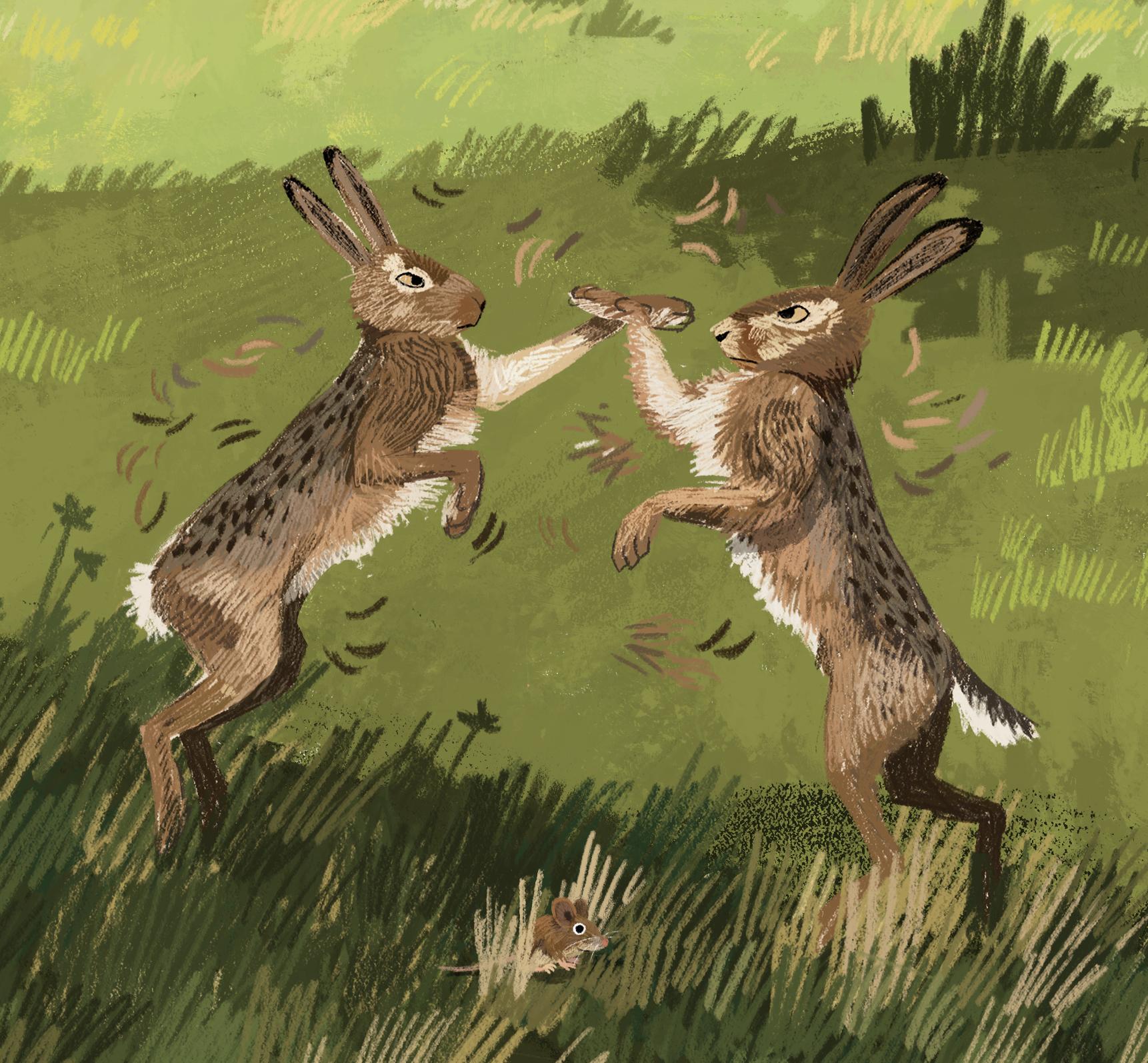 animal-atlas-hares