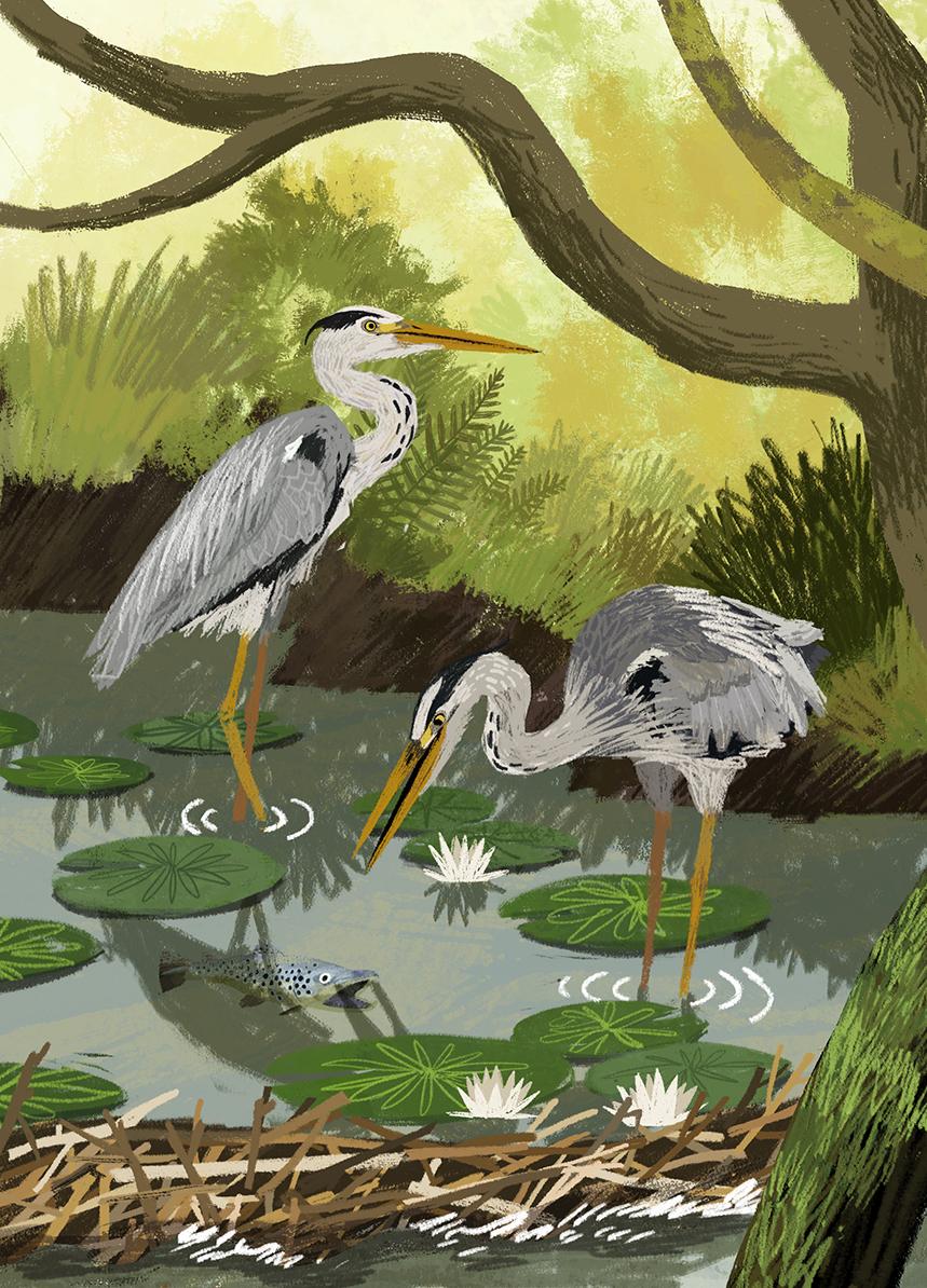 animal-atlas-herons-illus-anders-frang