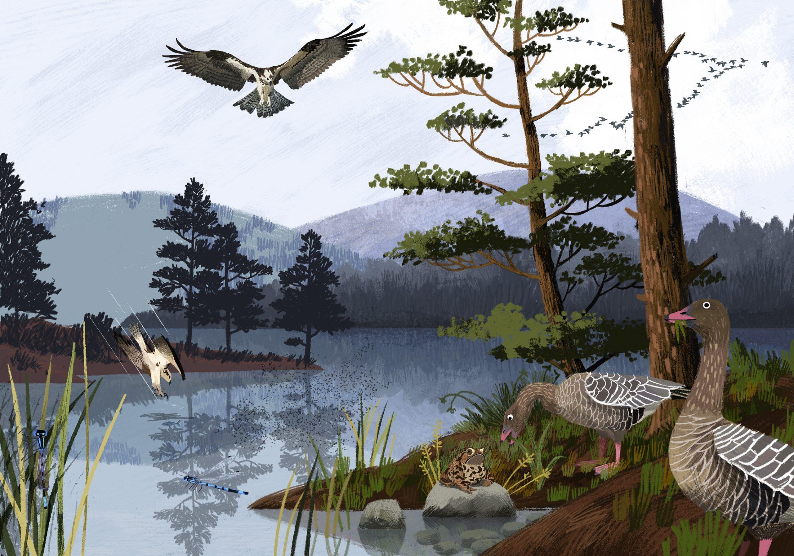 animal-atlas-livelylochs