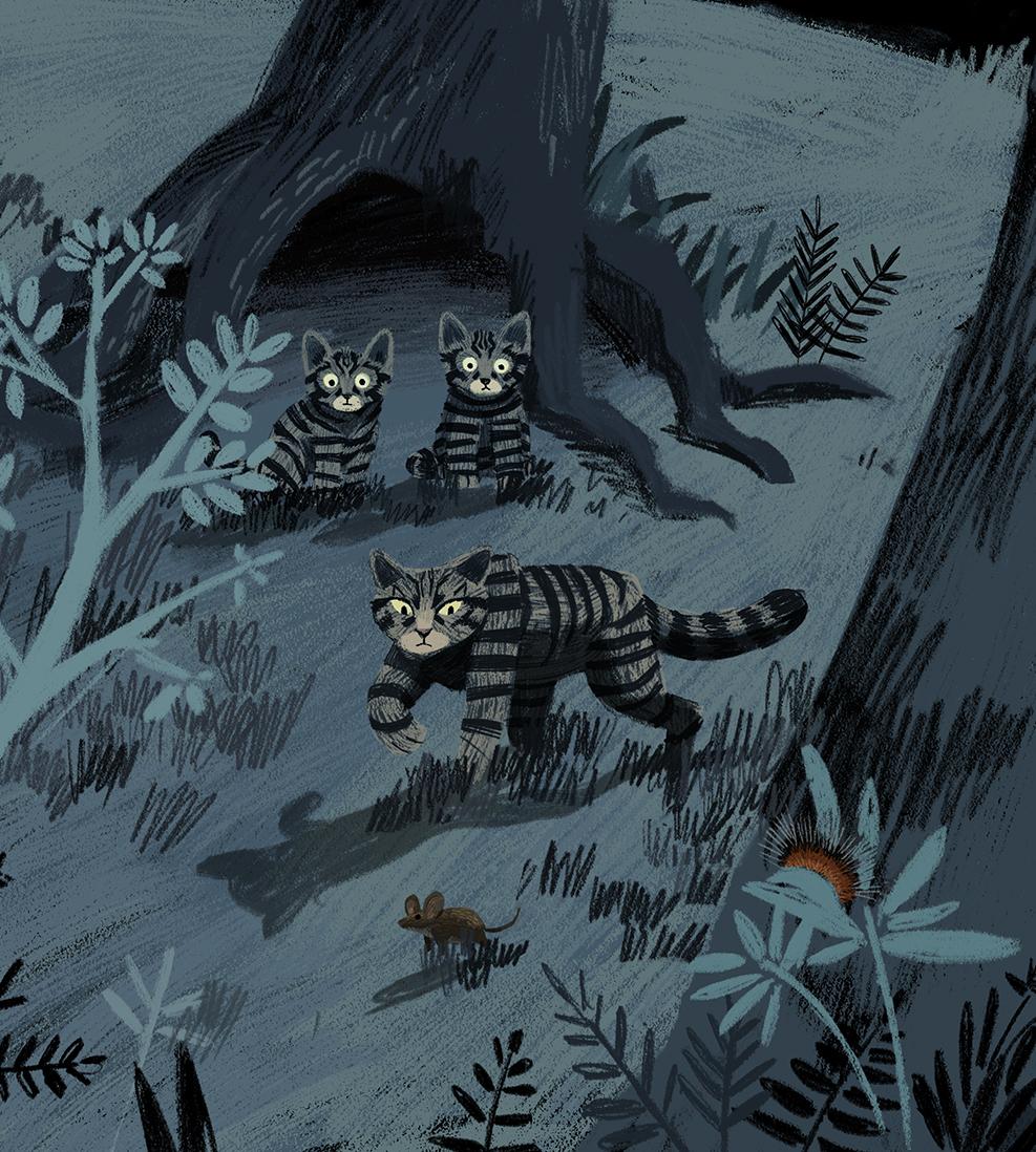 animal-atlas-wildcats
